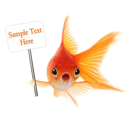 illustrates: Goldfish With Shocked Look on His Face. Illustrates Concept of Surprise, Trouble or Worry
