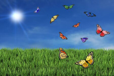 Wild and Free Butterflies in the Afternoon Sun Stock Photo - 4349201