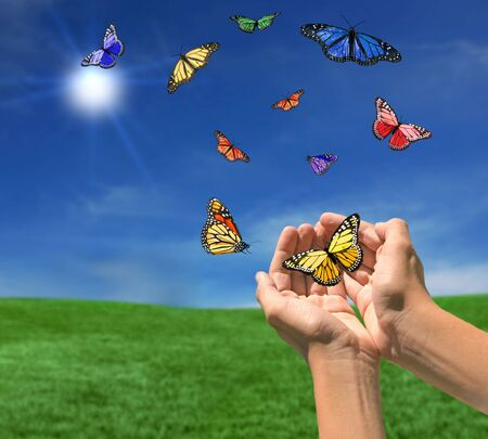 Butterflies Flying Outdoors Towards the Sun on a Beautiful Spring Day Stock Photo