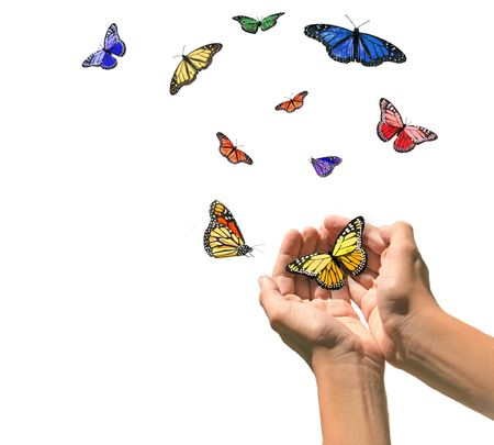 Hands Releasing Butterflies into Blank White Space. Easily Extracted. photo