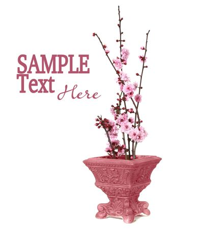 displayed: Cherry Blossoms Displayed in a Pink Vintage Vase With CopySpace Stock Photo