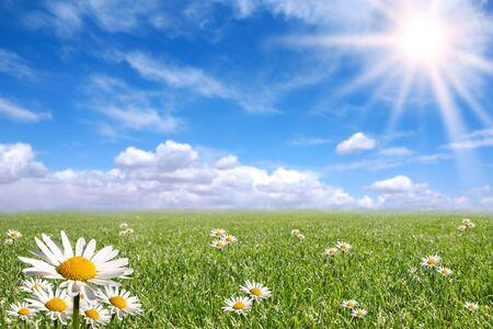 Green Grass, Blue Sky, and Daisy Landscape Stock fotó