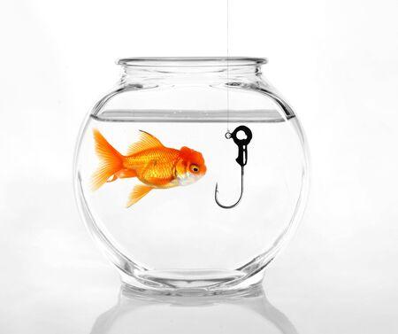 Haak in een Fish Bowl Begrip Being geprofiteerd van