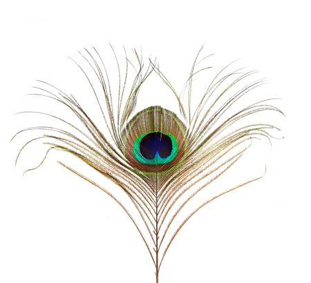 piuma di pavone: Peacock Feather isolati su sfondo bianco Archivio Fotografico