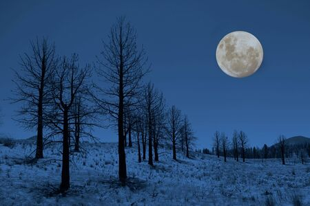 Moon and Trees in the Sierra Mountains