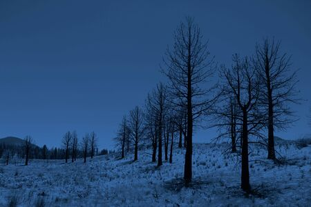 Stunning Moonlit Trees in the Sierra Mountains