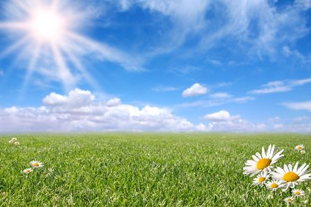 Bright Beautiful Daisy and Grass Field in the Summer Sun Stock Photo