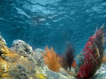 Under the Sea View of the Ocean With Plants and Coral Stock Photo - 5508298
