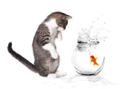 Little Kitten Playing With a Goldfish in a Bowl
