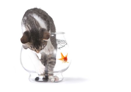 Cat in a Fishbowl Misbehaving Trying to Get Out Stock Photo