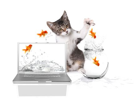 Playful Kitten Pawing at Gold Fish Jumping out of Water photo