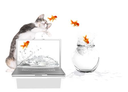 Bad Kitty Pawing at Goldfish Flying Out of Water photo