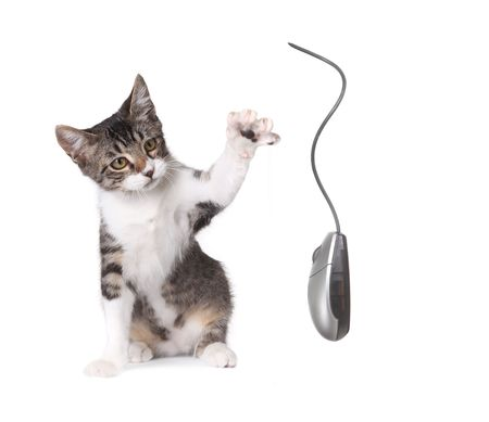 Kitten Pawing at a Computer Mouse on White