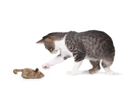 Cat and Fake Mouse on White Background Stock Photo