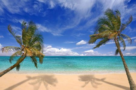 viewable: Image of tropical beach. There is no one viewable in the image. Horizontally framed shot.