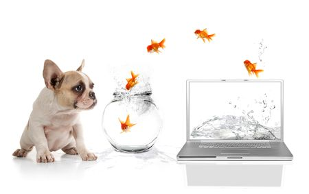 Adorable Puppy Watching Goldfish Escaping the Virtual World Stock Photo - 5853631
