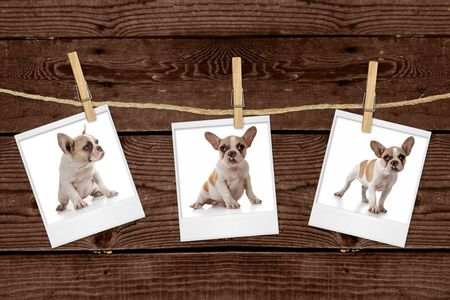 Adorable Puppy Pictures Hanging on a Rope photo