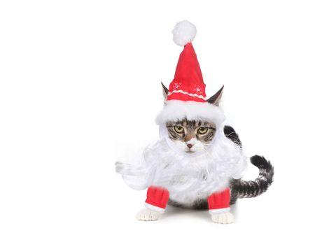 humbug: Grouchy Humbug Santa Kitten Glaring at the Viewer Stock Photo