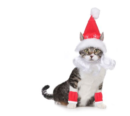 Humorous Cat Wearing a Santa Claus Hat and Beard on White