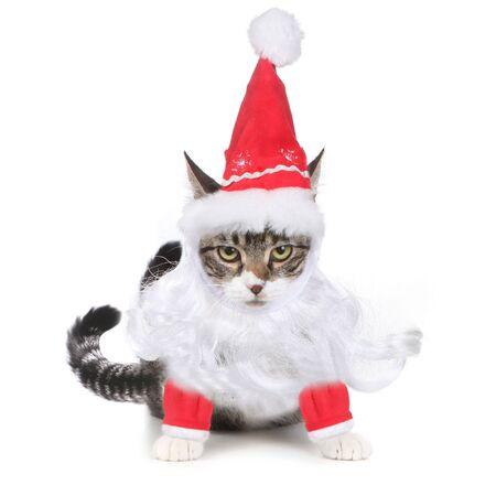 humbug: Mad But Humorous Humbug Santa Kitten Glaring at the Viewer Stock Photo