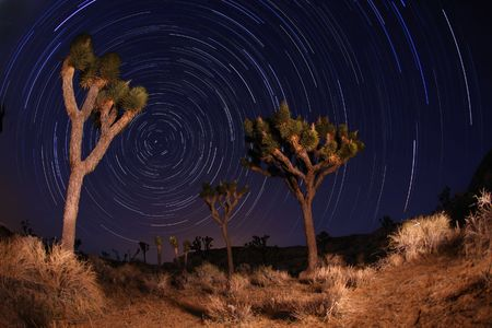 Star Trails at Night in Joshua Tree National Park in California Stock Photo - 6864374