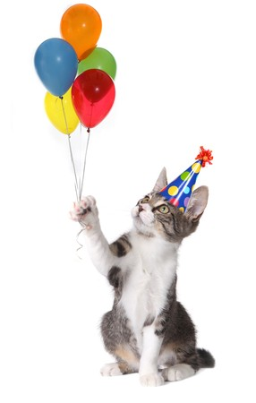 kitten small white: Birthday Cat Holding Balloons Wearing a Silly Hat