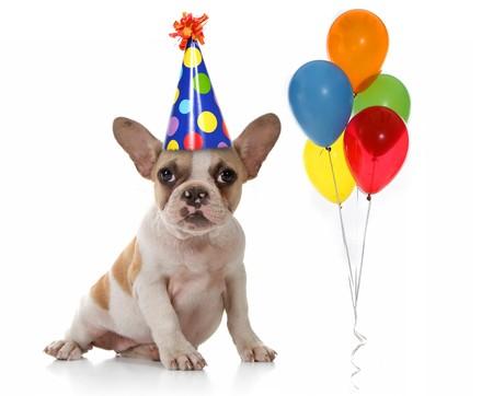 Vergadering Puppy hondje met verjaardag feest hoed en ballonnen. Studio Shot