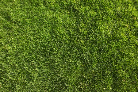 Bright Green Grass Background or Texture Shot from Straight Above Imagens