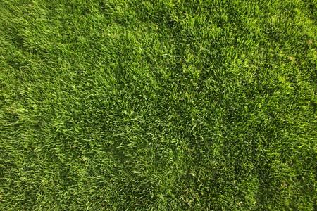 Helder groene gras achtergrond of textuur schot van direct boven