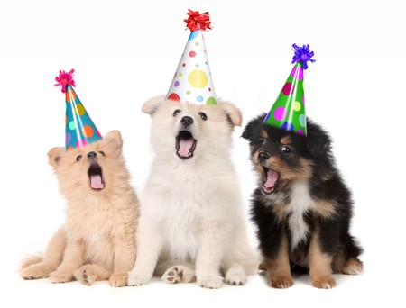 mutt: Humorous Puppies Singing Happy Birthday Song Wearing Silly Hats