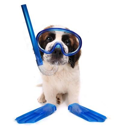 undersea: Funny image d'un �quipement de plong�e Puppy Portant sur fond blanc