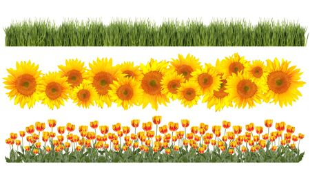 Spring Time Element Borders of Tulips, Sunflowers and Grass Easily Extracted