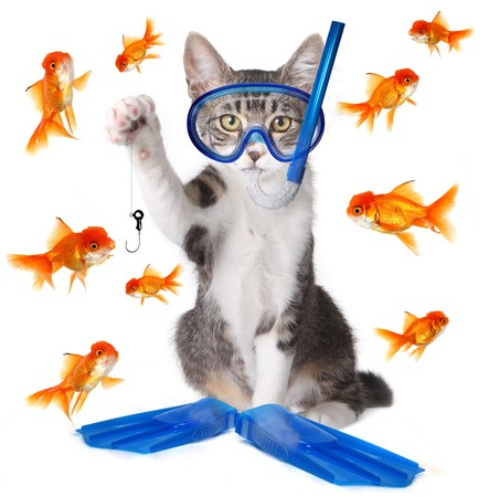 funny cats: Modern Spin on the Term Fishing to be Analogous with Phishing in the New Age of Technology