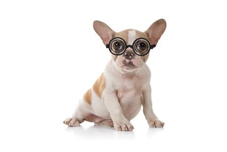 stitting: Sitting Puppy Dog With Cute Expression Studio Shot Stock Photo