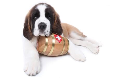 목 주위 구조 대포와 세인트 버나드 강아지
