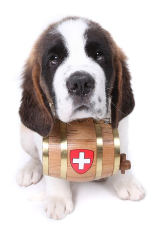 Saint Bernard puppy with a rescue barrel around the neck Stock Photo - 8059249