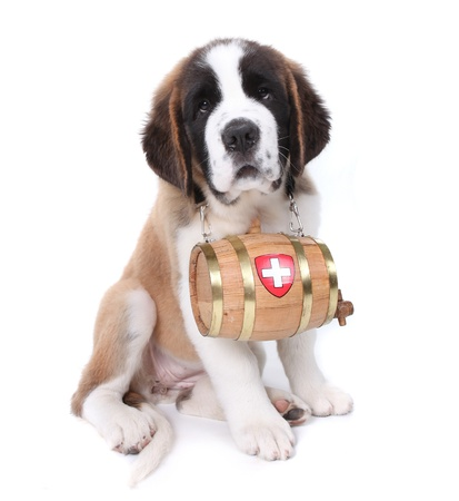 Adorable Saint Bernard Puppy Portrait Stock Photo - 9863089
