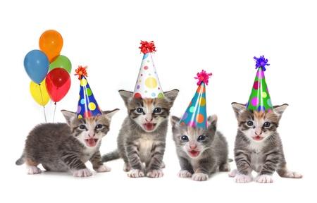 생일 모자와 풍선 흰색 배경에 새끼 고양이 노래 스톡 콘텐츠