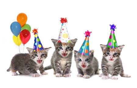 Singing Kittens on a White Background With Birthday Hats and Balloons Stok Fotoğraf