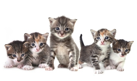 Adorable Cute Kittens on White Background Фото со стока - 10452587