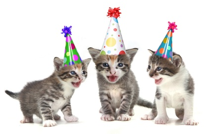 Singing Kittens on a White Background With Birthday Hats Stock Photo - 10629566