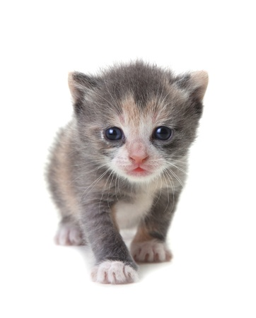Adorable Cute Kitten on a White Background photo