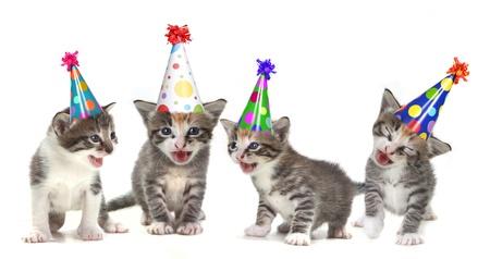 생일 모자와 흰색 배경에 새끼 고양이 노래 스톡 콘텐츠
