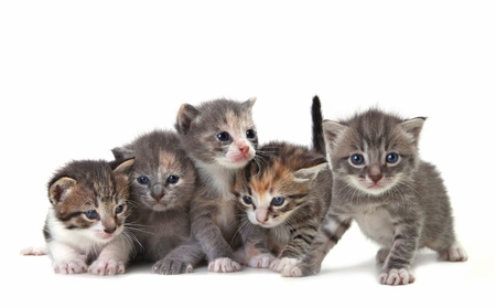Adorable Cute Kittens on White Background Foto de archivo