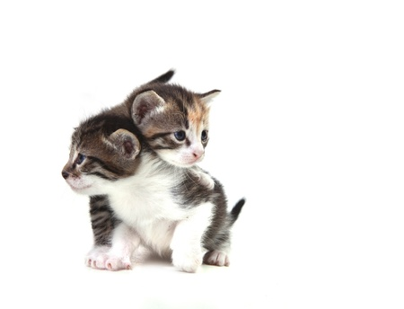 Adorable Cute Kittens on White Background Stock Photo