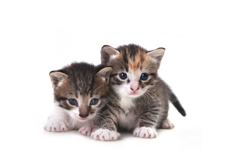 Adorable Cute Kittens on White Background Stock Photo - 10629568