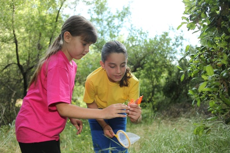 Sibling Girls Hunting for Insects While Camping Outdoors Stock Photo - 11227126
