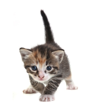 Adorable Cute Kitten on a White Background Stock Photo