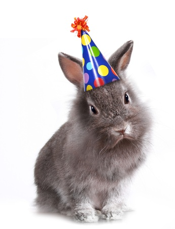 Furry Grey Rabbit With a Birthday Hat On photo