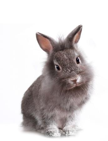 사랑스러운 작은 토끼